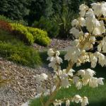 3 wytrzymałe rośliny do ogrodu